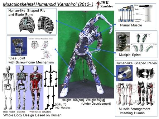 筋肉と骨を持つヒューマノイド・ロボット
