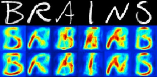 brains-1.jpg